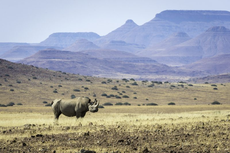 Rare Desert Adapted Black Rhino - Damaraland Namibia – Self-Drive, Bespoke & Fly-in Safaris, Guided Explorations & Privately Guided Safaris