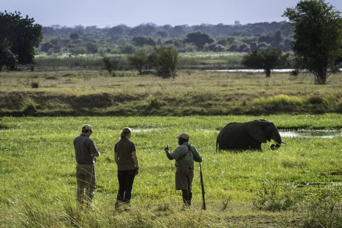 Walking the Zambezi Floodplain at the Ruckomechi Camp – Zimbabwe home the world's largest herds of elephants