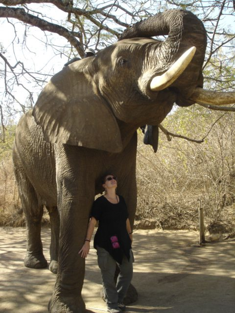 Caroline Berkeley standing under a rescue elephant bull
