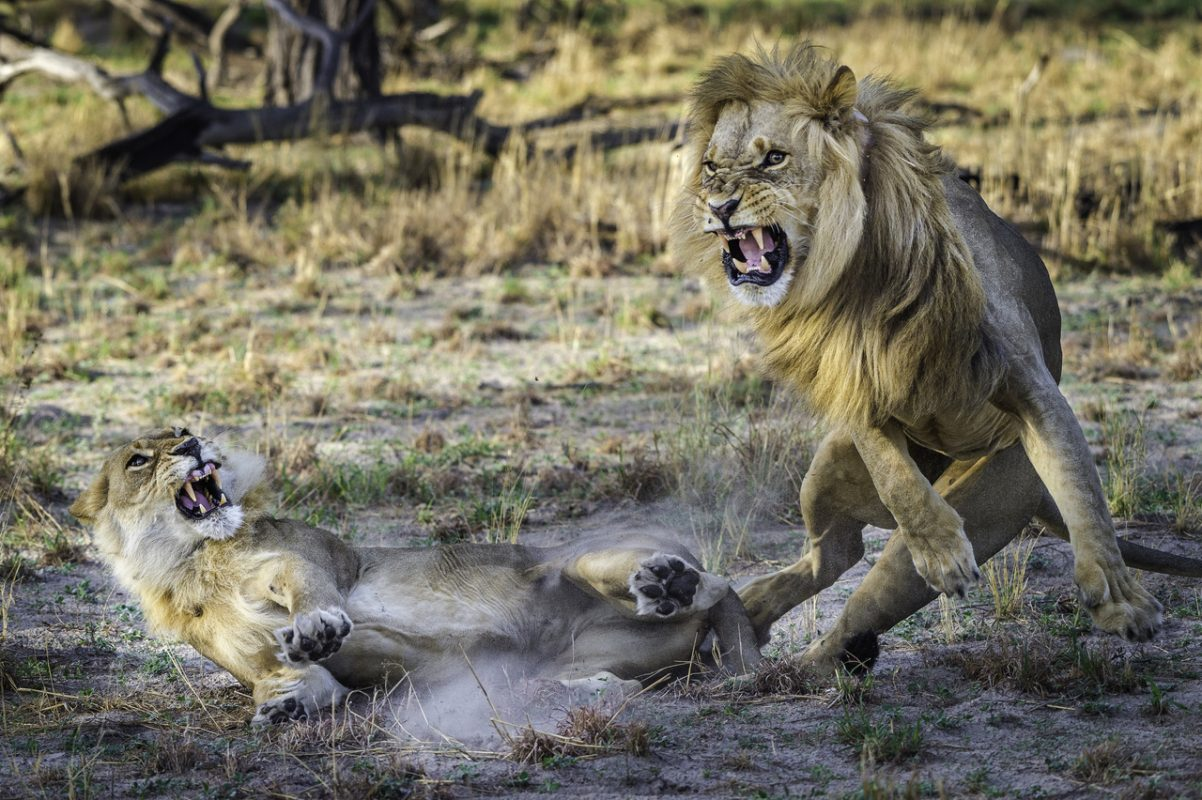 Botswana photography safaris where the most unexpected can be caught on camera