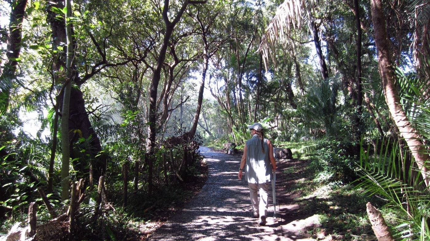 The rainforest track along the Victoria Falls chasm - Zimbabwe