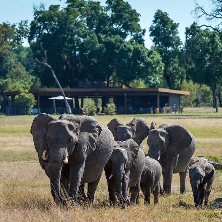 Davisons Camp Hwange National Park Zimbabwe home to some of the largest free range herds of elephants on the planet
