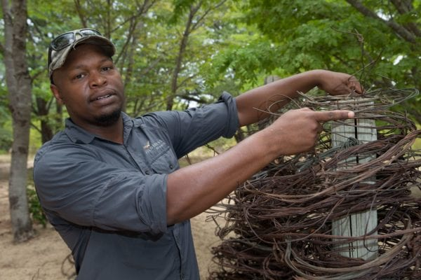 A Scorpion Anti-poaching team member stacking wire snares that they have found in the bush - Zimbabwe