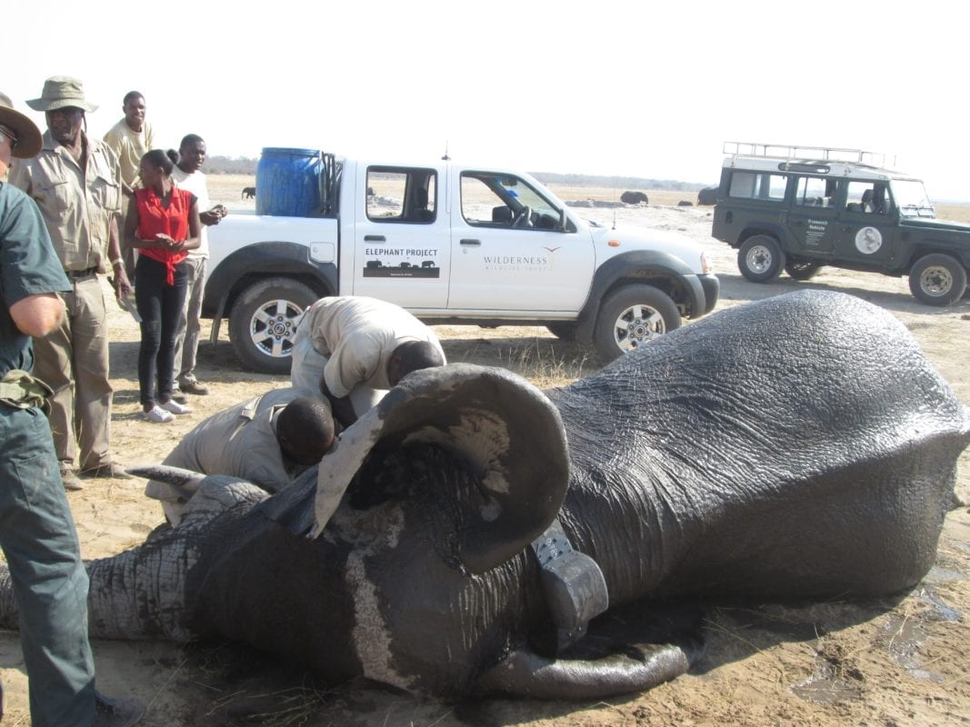 Elephant Collaring Project - Hwange National Park - Zimbabwe