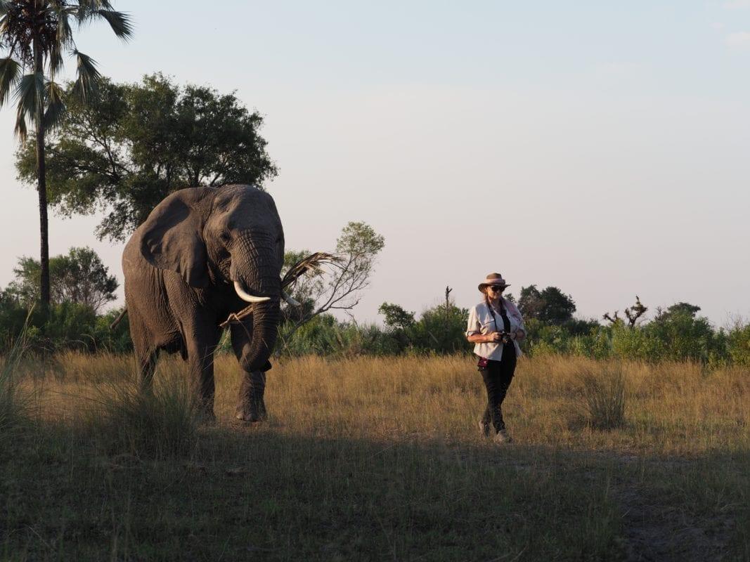 Abu Elephant walking with Caroline Berkeley