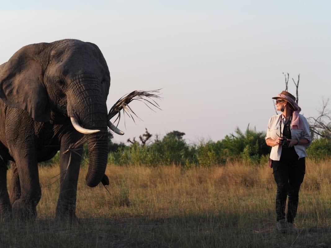 Walking with Cathy the Abu elephant matriarch - Okavango Delta Botswana
