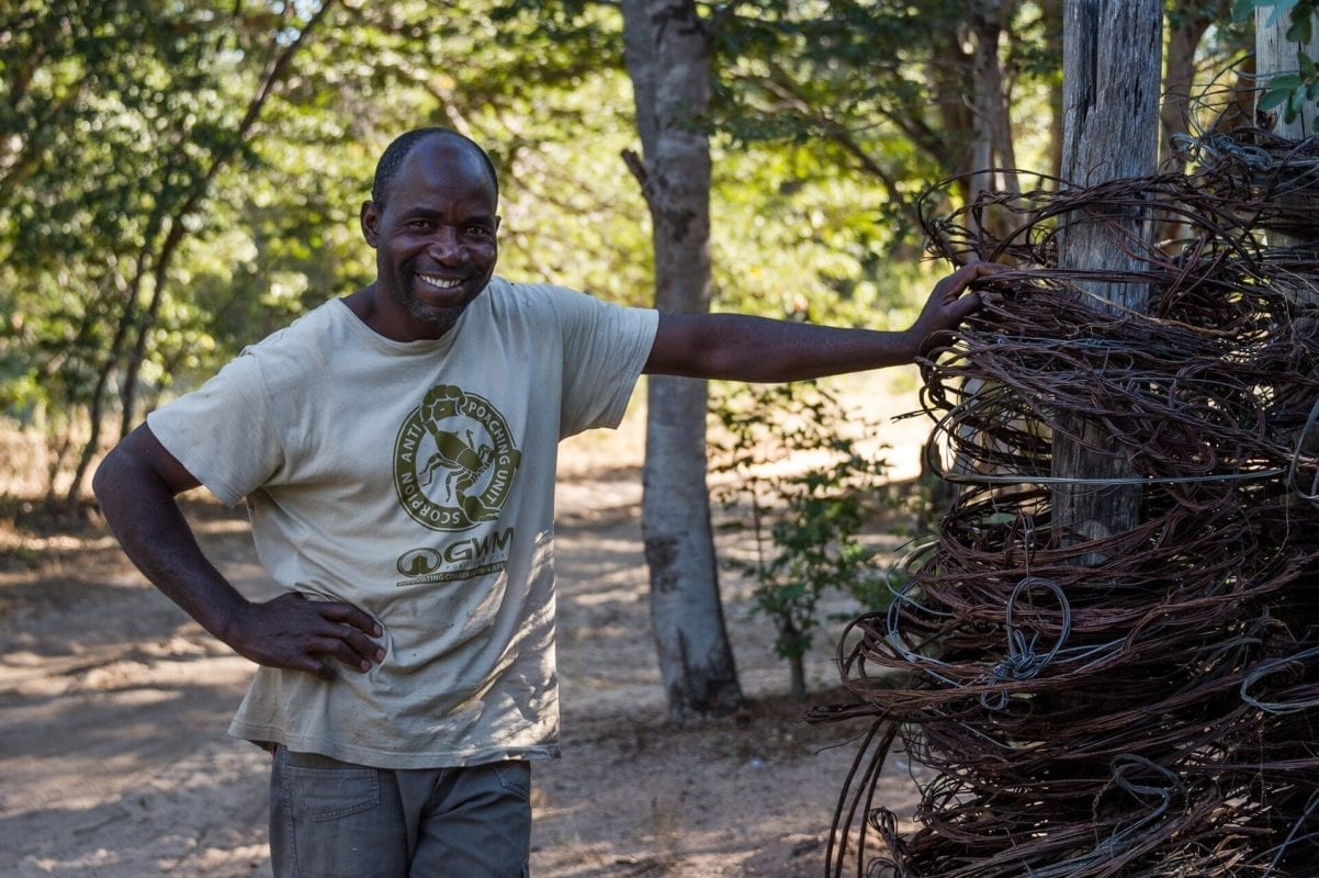 Scorpion Anti-poaching team member beside snares found in the bush - Zimbabwe