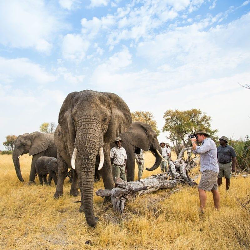 Photographing the Abu Herd Botswana