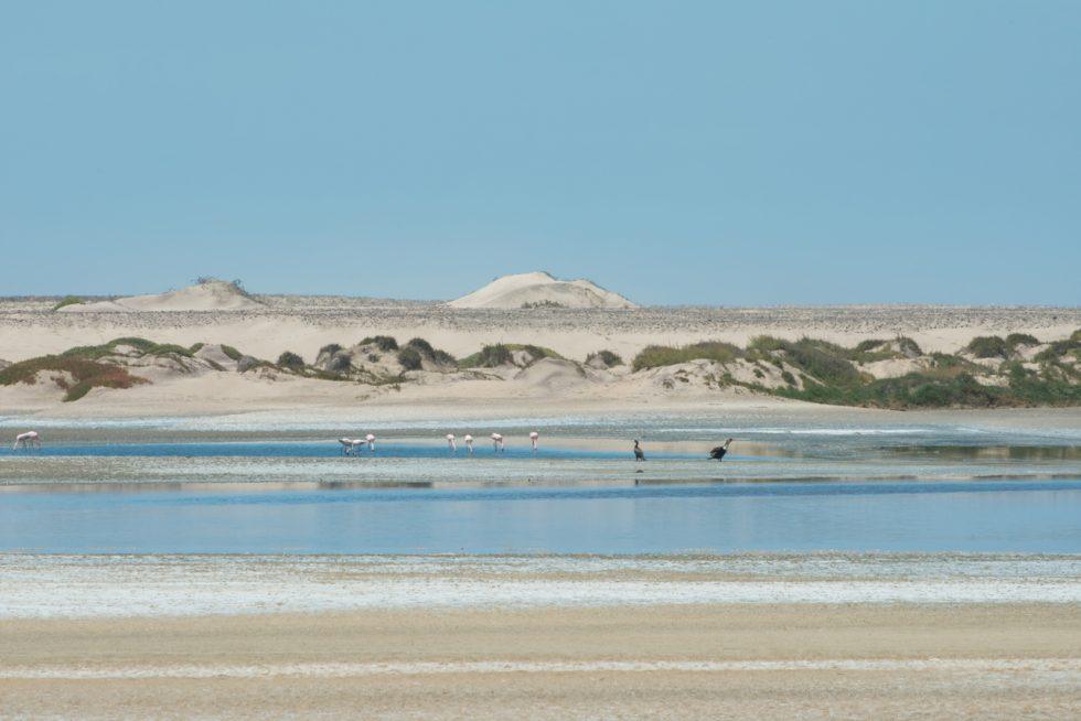 The Skeleton Coast with flamingos