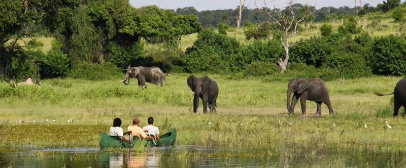 Canoeing the Chobe River along side elelphants - Namibia